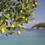 huile-olive-mediterranee